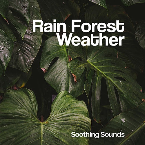 Rain Forest Weather von Soothing Sounds