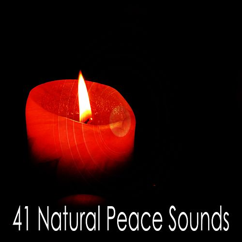 41 Natural Peace Sounds by Yoga Music