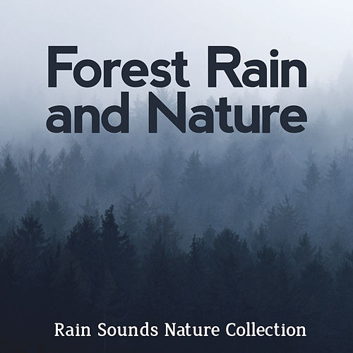 Forest Rain and Nature by Rain Sounds Nature Collection