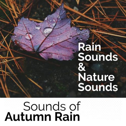 Sounds of Autumn Rain von Rain Sounds
