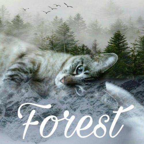 Forest von Jatr