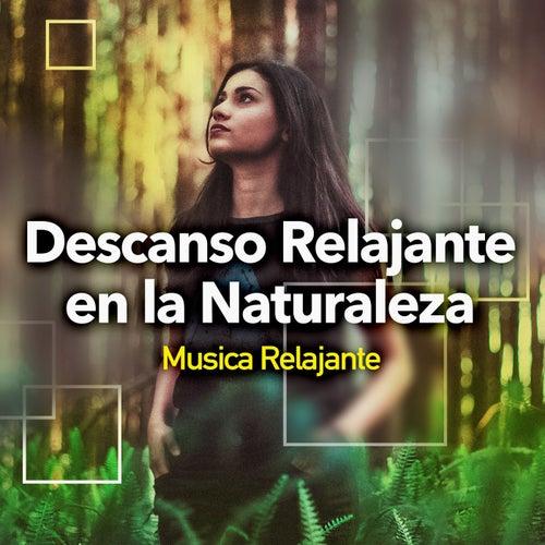 Descanso Relajante en la Naturaleza de Musica Relajante