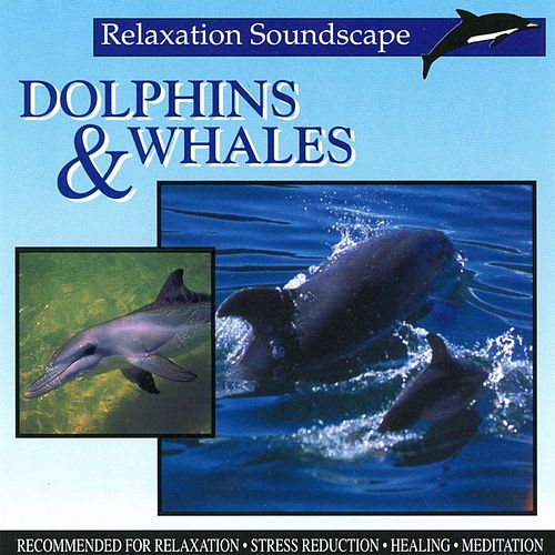 Dolphins & Whales by Anton Hughes