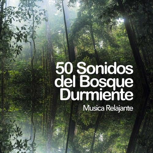 50 Sonidos del Bosque Durmiente de Musica Relajante