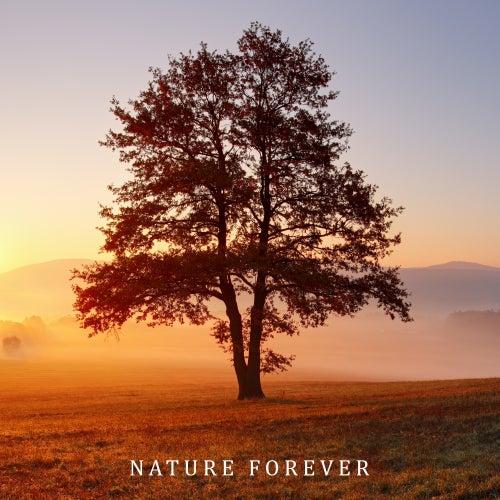 Nature Forever: Healing Music for Relaxation, Spa, Massage, Deep Meditation, Zen, Lounge de Nature Sounds Artists