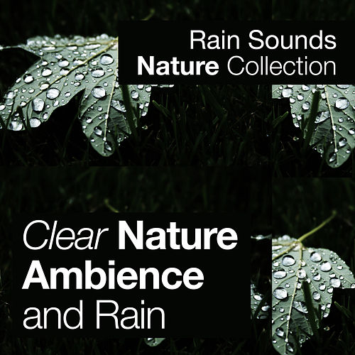 Clear Nature Ambience and Rain by Rain Sounds Nature Collection