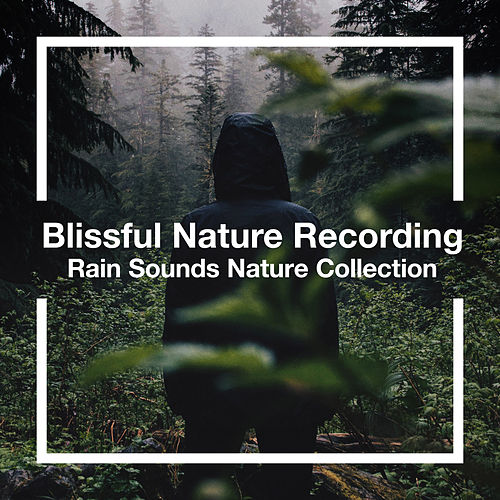 Blissful Nature Recording by Rain Sounds Nature Collection