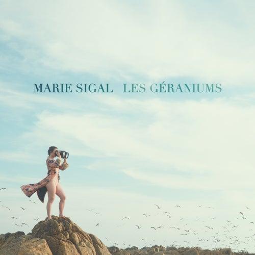 Les géraniums by Marie Sigal