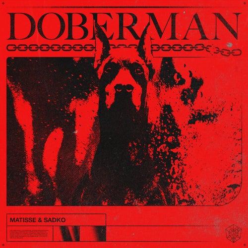 Doberman von Matisse