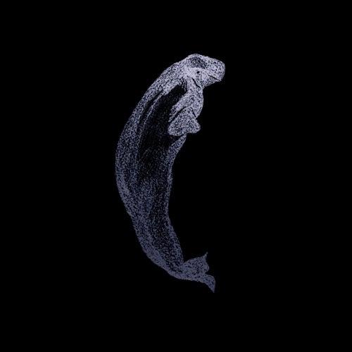 Belugas by Eddy Woogy