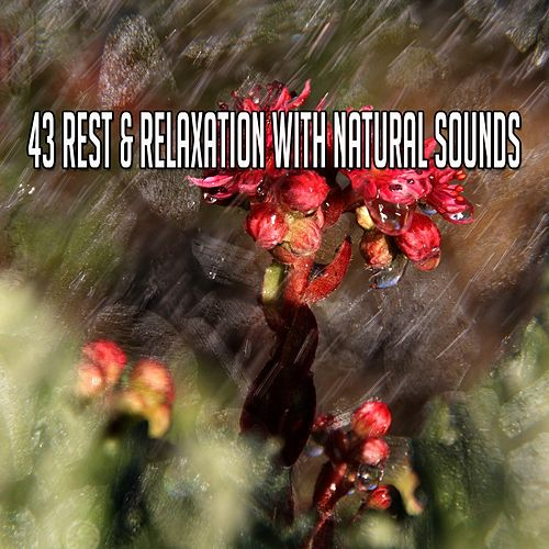 43 Rest & Relaxation with Natural Sounds de Water Sound Natural White Noise