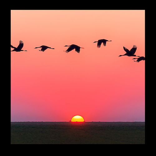 Sunrise de Sebastian Coronel