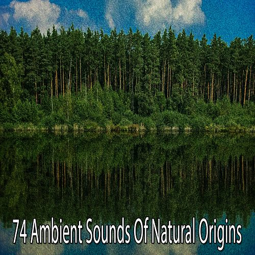 74 Ambient Sounds of Natural Origins de Yoga