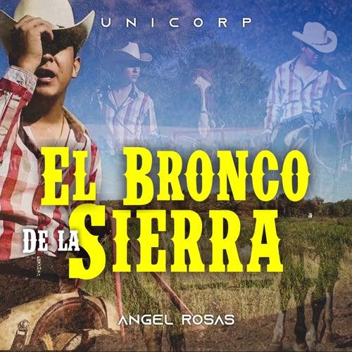 El Bronco de la Sierra de Angel Rosas