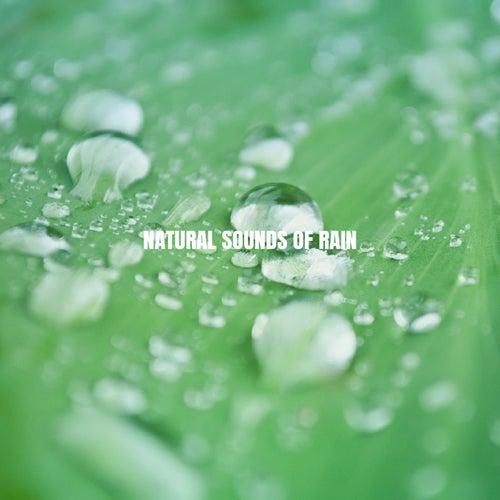 Natural Sounds of Rain von Nature Sounds (1)