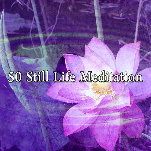 50 Still Life Meditation von Massage Therapy Music