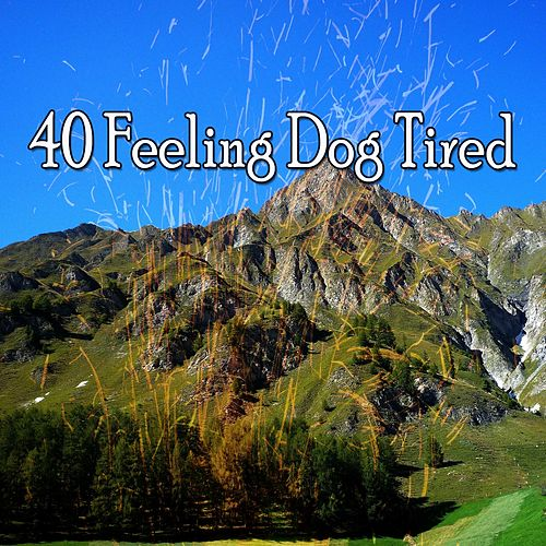 40 Feeling Dog Tired de Water Sound Natural White Noise