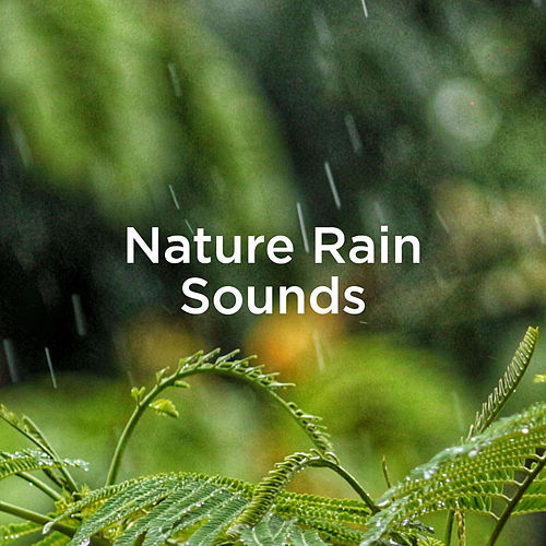 Nature Rain Sounds von Rain Sounds