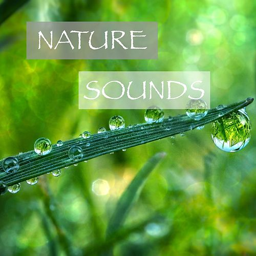 Nature Sounds de Various Artists
