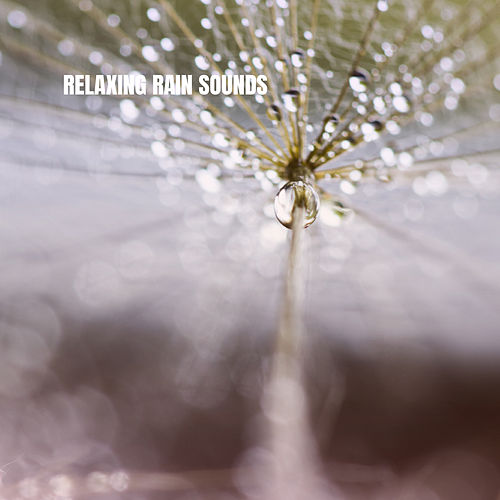 Relaxing Rain Sounds by Rain Sounds and White Noise