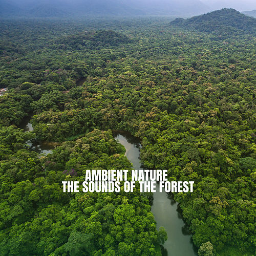 Ambient Nature: The Sounds of the Forest di Rain Sounds