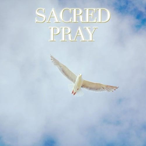 Sacred Pray di Don Luca Broggi