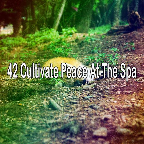 42 Cultivate Peace at the Spa by Best Relaxing SPA Music
