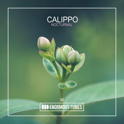 Nocturnal von Calippo