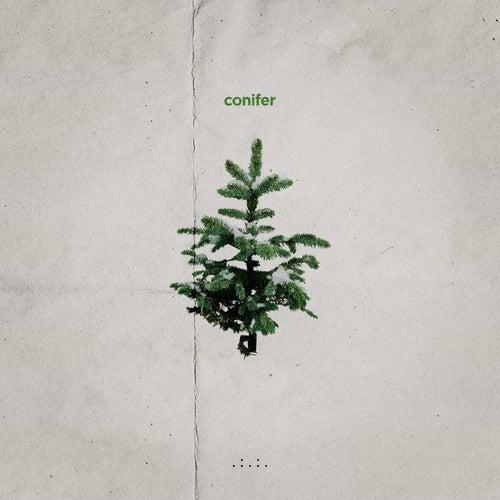 Conifer by Matt Van
