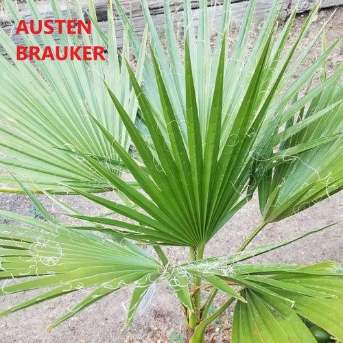 Iris by Austen Brauker