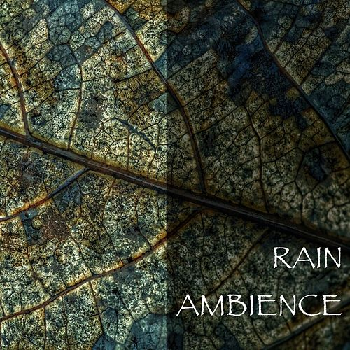Rain Ambience by Various Artists