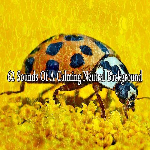 62 Sounds of a Calming Neutral Background von Massage Therapy Music