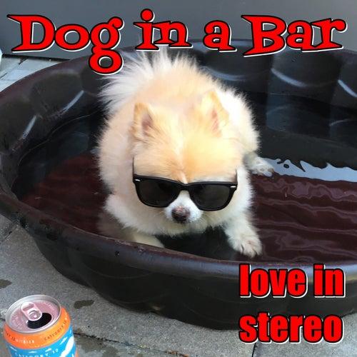 Dog in a Bar de Love In Stereo