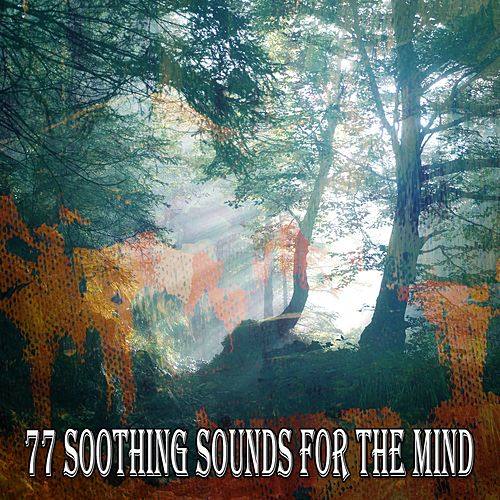 77 Soothing Sounds for the Mind de Meditación Música Ambiente