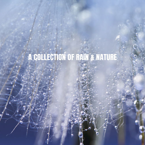 A Collection of Rain & Nature de Rain Sounds Nature Collection