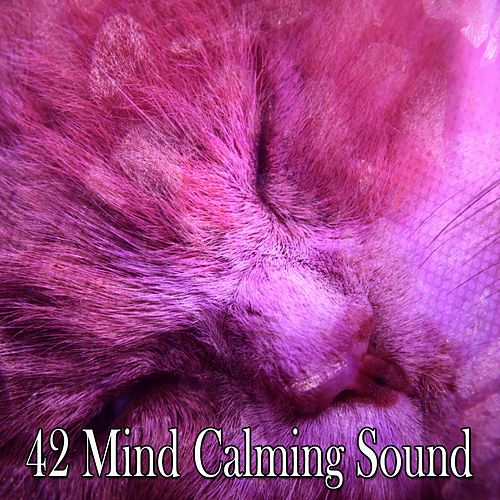 42 Mind Calming Sound by Deep Sleep Music Academy