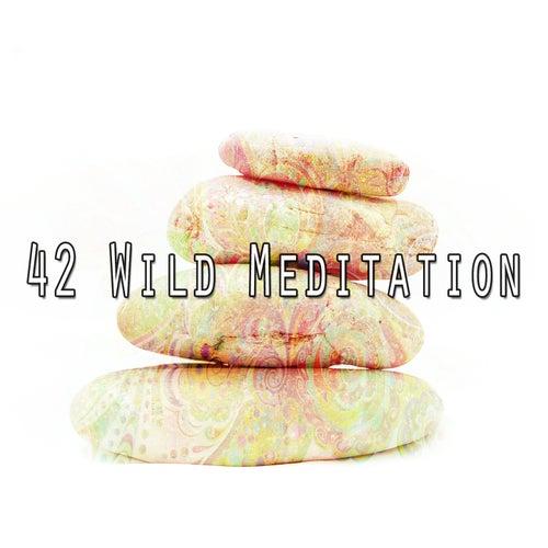42 Wild Meditation by Deep Sleep Meditation
