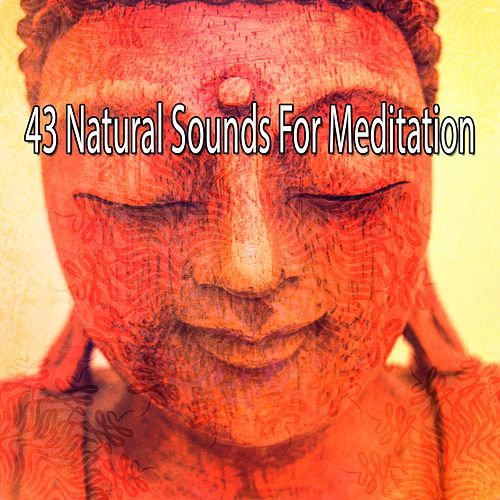 43 Natural Sounds for Meditation von Yoga Music