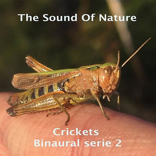 Crickets - Binaural Serie 2 di The Sound of Nature