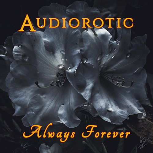 Always Forever by Audiorotic
