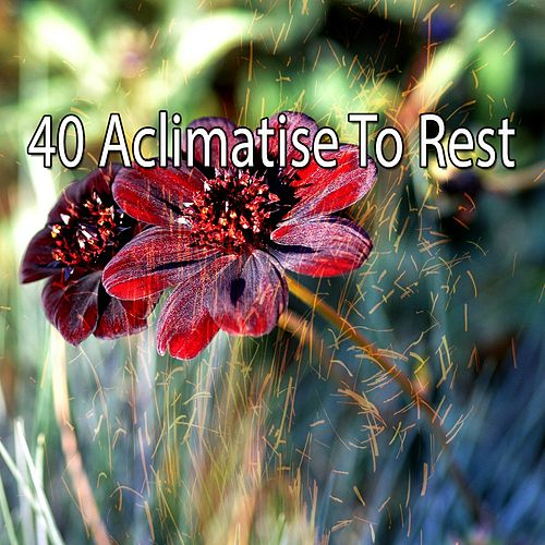40 Aclimatise to Rest de Best Relaxing SPA Music