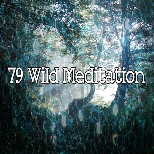 79 Wild Meditation by Deep Sleep Meditation