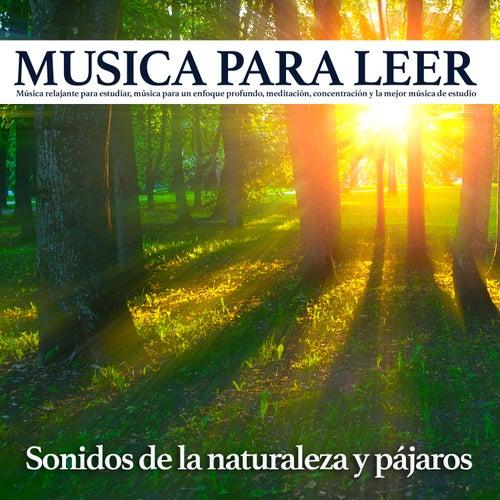 Musica para leer - Sonidos de la naturaleza y pájaros: Música relajante para estudiar, música para un enfoque profundo, meditación, concentración y la mejor música de estudio de Musica Para Leer