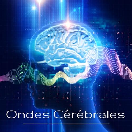 Ondes Cérébrales: Musique d'ambiance sur le rythme cérébral avec ondes alpha, theta et delta by Various Artists
