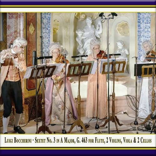 Boccherini: Sextet No. 3 in A Major, G. 463 (Live) by Quantz Collegium
