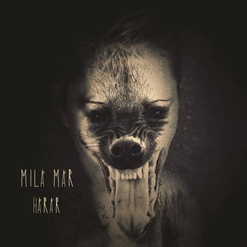Harar by MILA MAR