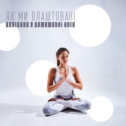 Як ми влаштовані (Довідник з домашньої йоги, Вечірні медитування, Глибокий Дзен релакс, Природній баланс, Фон природи) by Різні виконавці