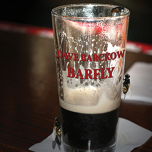 Barfly by Dave Barckow