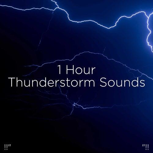 !!' 1 Hour Thunderstorm Sounds '!! de Thunderstorm Sound Bank