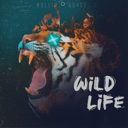 Wildlife by Rollin Royce